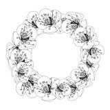 Plum Blossom Flower Wreath Outline isolated on White Background. Vector Illustration.  stock illustration