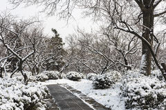 Plum Blossom Hill snowscape Royalty Free Stock Photography
