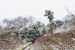 Plum Blossom Hill snowscape Royalty Free Stock Image