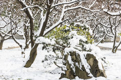 Plum Blossom Hill snowscape Royalty Free Stock Photos