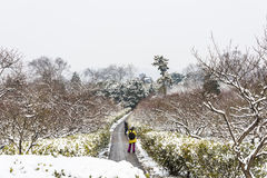Plum Blossom Hill snowscape Royalty Free Stock Images