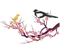 plum blossom and Magpie Royalty Free Stock Photos