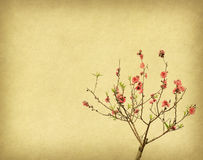 Plum blossom on old antique  paper background Royalty Free Stock Images
