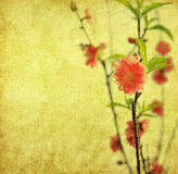 Plum blossom on old antique vintage paper Stock Images