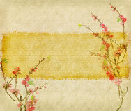 Plum blossom on Old antique vintage paper. Background Stock Photos