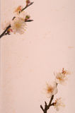 Plum blossom on Old antique vintage paper Royalty Free Stock Images