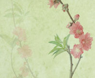 Plum blossom on old antique vintage paper Stock Photography