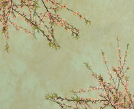 Plum blossom on Old antique vintage paper. Background royalty free stock photo