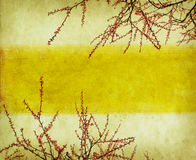 Plum blossom on old antique vintage paper Royalty Free Stock Photography