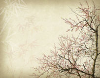 Plum blossom on old antique vintage paper Stock Images