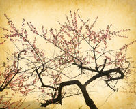 Plum blossom on old antique vintage paper Stock Photo