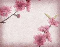 Plum blossom on old antique vintage paper Royalty Free Stock Image