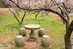 Plum blossom Stock Images