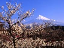 Plum blossoms IV Stock Photos