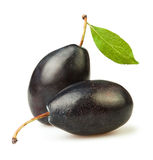 Plum blue two. On white background Royalty Free Stock Photography