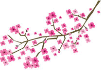 Plum branch in blossom. Illustration of a plum branch in blossom royalty free illustration