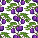 Plum branch seamless pattern. Vector drawing. Hand drawn isolate Stock Photography