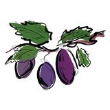 Plum on the branch Royalty Free Stock Photos