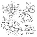 Plum branches set. Plum branches vector set on white background vector illustration