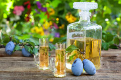 Plum brandy or rakija. Bottle and two glasses with plum brandy Stock Image