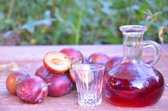 Plum brandy or schnapps with fresh and ripe plums in the grass. Bottle of homemade brandy and jiggers Royalty Free Stock Photography