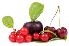 Plum, cherries and Far Eastern cherry Royalty Free Stock Photos