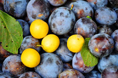 Plum And Cherry Plum Close Up Beauty Background royalty free stock image