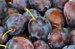 Plum, close up, DOF Stock Image