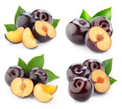 Plum collection isolated Stock Images