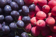 Plum and crabapples. Lilac plum and pink crabapples, on grass, in the garden Stock Photos