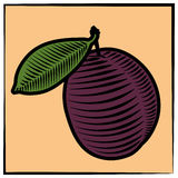 Plum-engraving-color Stock Photos