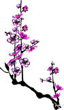 Plum flower. Vector illustration for a artistic plum flower, china art brush painting royalty free illustration