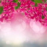 Plum Flowers de florescência no fundo do céu Foto de Stock Royalty Free