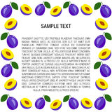 Plum Frame with Text Royalty Free Stock Photos