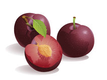 Plum Fruit. Realistic vector illustration of a plum or prune, and a half plum Stock Photo