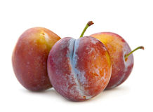 Plum fruit Stock Photography