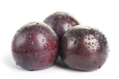 Plum fruit with dew Royalty Free Stock Photo