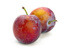 Plum fruit isolated Stock Images