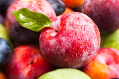 Plum fruit mix Royalty Free Stock Photo