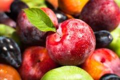 Plum fruit mix Stock Image
