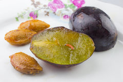 Plum fruit moth Stock Images