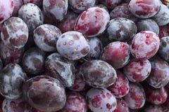 Plum fruits background. Freshly washed Stock Photo