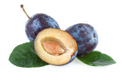 Plum fruits Stock Photography