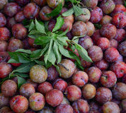 Plum fruits in Moc Chau Royalty Free Stock Photography