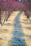 Plum garden Stock Images