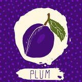 Plum hand drawn sketched fruit with leaf on background with dots pattern. Doodle vector plum for logo, label, brand identity. Royalty Free Stock Photo