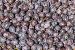 Plum harvest in the late summer Stock Image