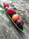 Plum pitter in action Stock Images