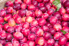 Plum harvest texture Royalty Free Stock Image