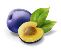 Plum. Illustration. Stock Images